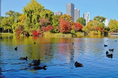 ミノルタで撮る札幌の秋~中島公園~4