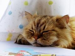 寝ても寝ても眠い春