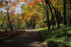 日本庭園への道