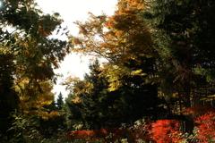 晩秋の百合が原公園8