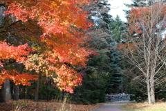 晩秋の百合が原公園10