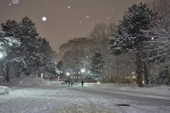 凍える美しき学び舎