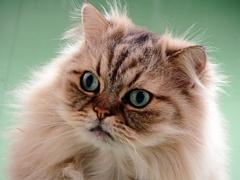 休日の猫たち・・・トモ