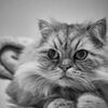 Thinking Time(=^・^=)
