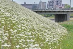 白い河川敷(OLD MINOLTA LENS ON CCD SENSOR)