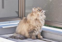 休日の猫たち~トモ~