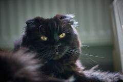 休日の猫たち・・・ベベ