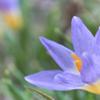 我が家の庭のお花・・・第二弾