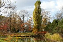 晩秋の百合が原公園3