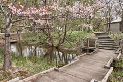大学構内の日本庭園