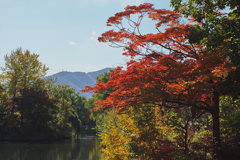菖蒲池、紅葉、黄葉&藻岩山