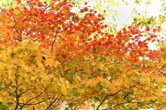 紅葉・・・黄葉・・・緑葉