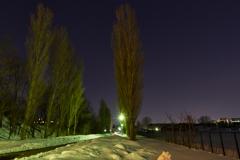 平成ポプラ並木の夕暮れ