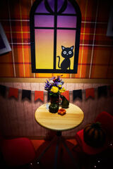 Black cat in the show window