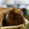 巣籠の3連休~猫と戯れる日々~(=^・^=)・・・スズ