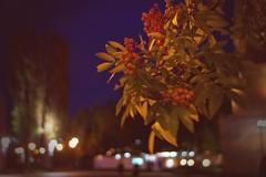 秋風吹く街角