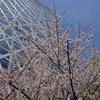 新宿 西口 桜