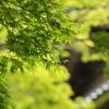 鎌倉 新緑 令和