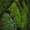お寺 石積 苔