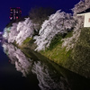 夜桜リフレクション