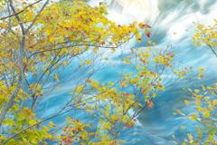 渓流を彩る