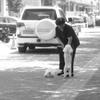 愛犬と戯れる