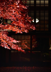 秋を映す②