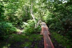 田代平湿原に向かう木道