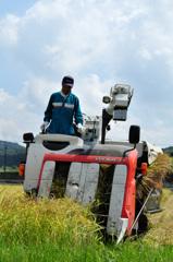 早稲田の刈り入れがはじまりました