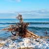 海 流木の根?