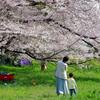 思い思いの桜