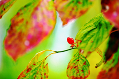 赤い実 花水木