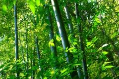 竹林の空気の中で(10歳作)