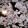 市民公園の桜