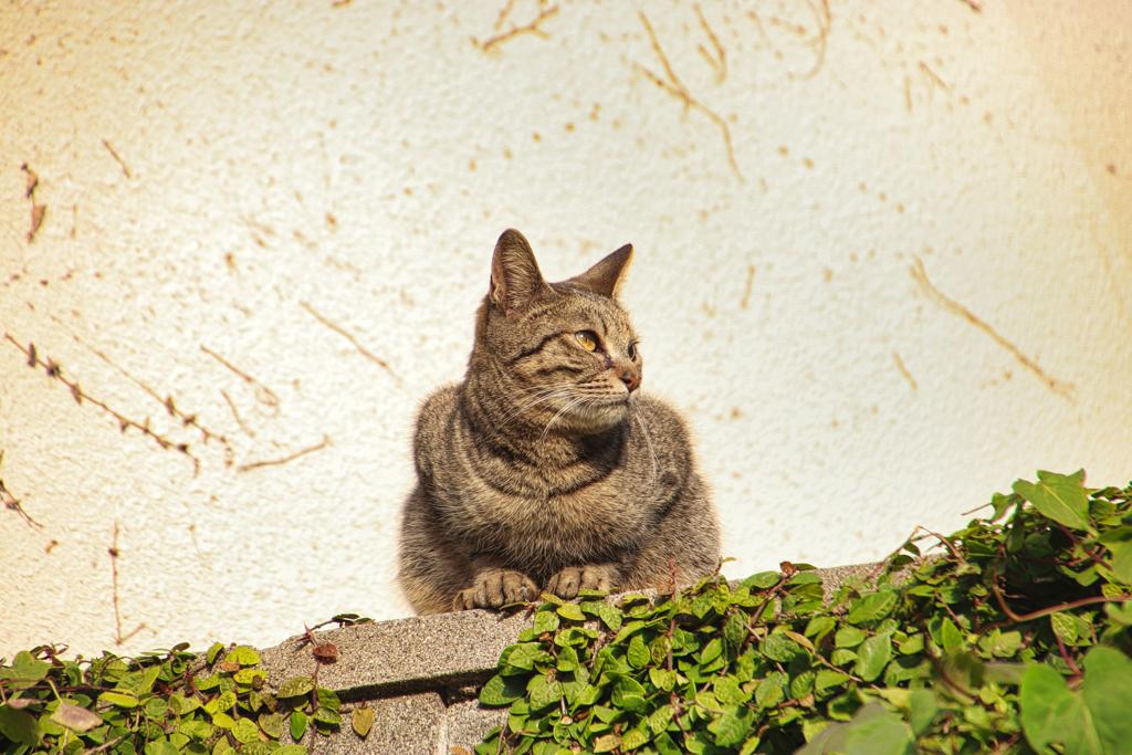 空き地で暮らす外猫視線の先にスズメ