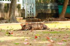 公園の地面に寝転がる外猫