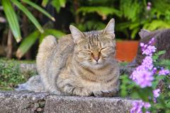 民家の入り口前で寛ぐ笑顔が可愛い外猫