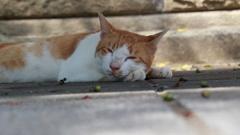 公園のベンチの下で寝る外猫