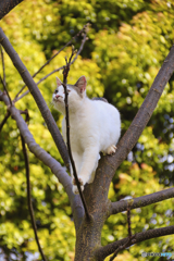 木の上の外猫