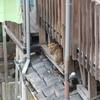 過疎化が進む住宅街に暮らす猫