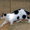 公園に暮らす外猫