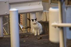 ガードレールのそばで周りの様子を見る外猫