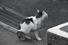町中で暮らす外猫 痒くて後ろ足で首の周りをかく