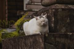 灯籠の隙間で寛ぐ外猫
