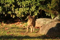 公園にいる子猫