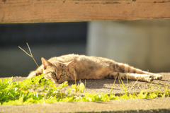 川の護岸で寛ぐ外猫