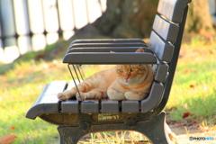 ベンチで寛ぐ外猫