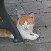 公園のベンチの下にいる外猫