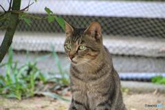 公園に居る外猫