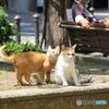 公園に暮らす外猫仲良し